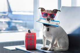 Pet Sitting Services for Travelers